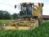 ROPA Eurotiger cosechadora de remolacha