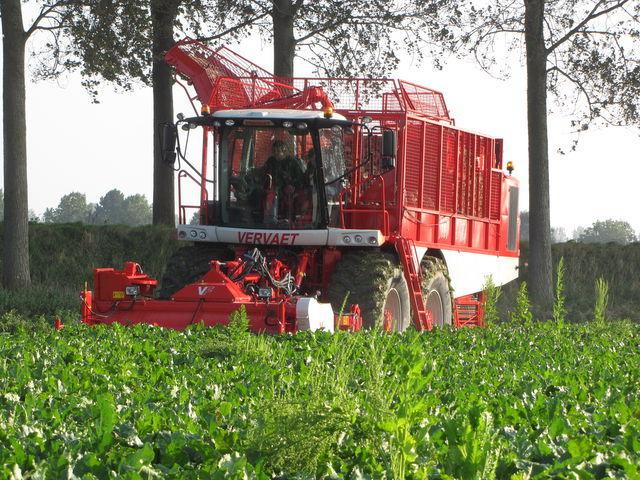 VERVAET 625 cosechadora de remolacha nueva