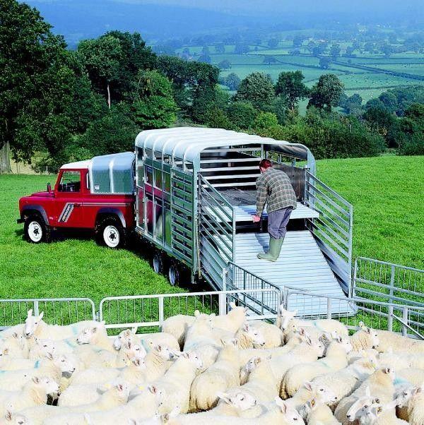 IFOR Williams TA510 remolque de ganado