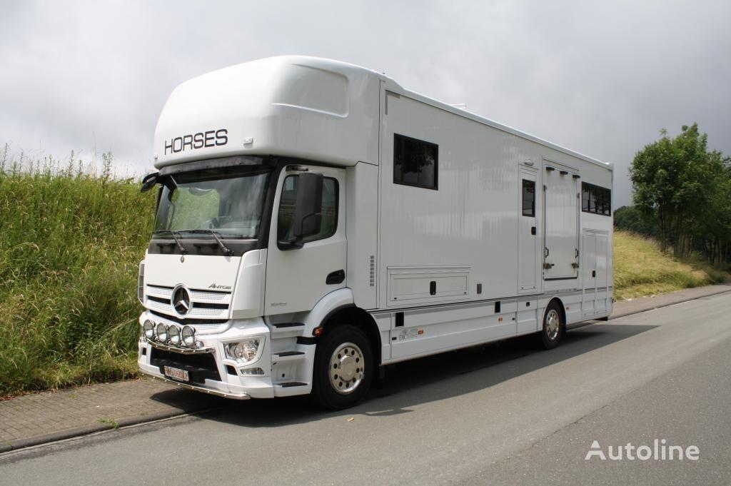 MERCEDES-BENZ Antos Paardenvrachtwagen Magic Pop-out 5 paard camión para transporte de ganado nuevo