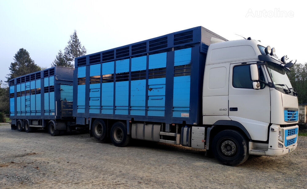 VOLVO FH 540 for cattle transport camión para transporte de ganado + remolque para transporte de ganado
